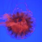 Shanghai jellyfish I, 2014